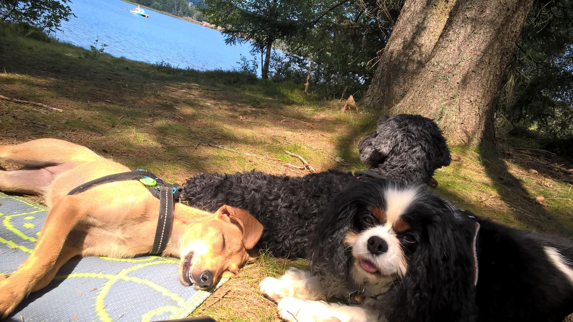 Les chiens médiateurs aussi ont le droit à des vacances!!